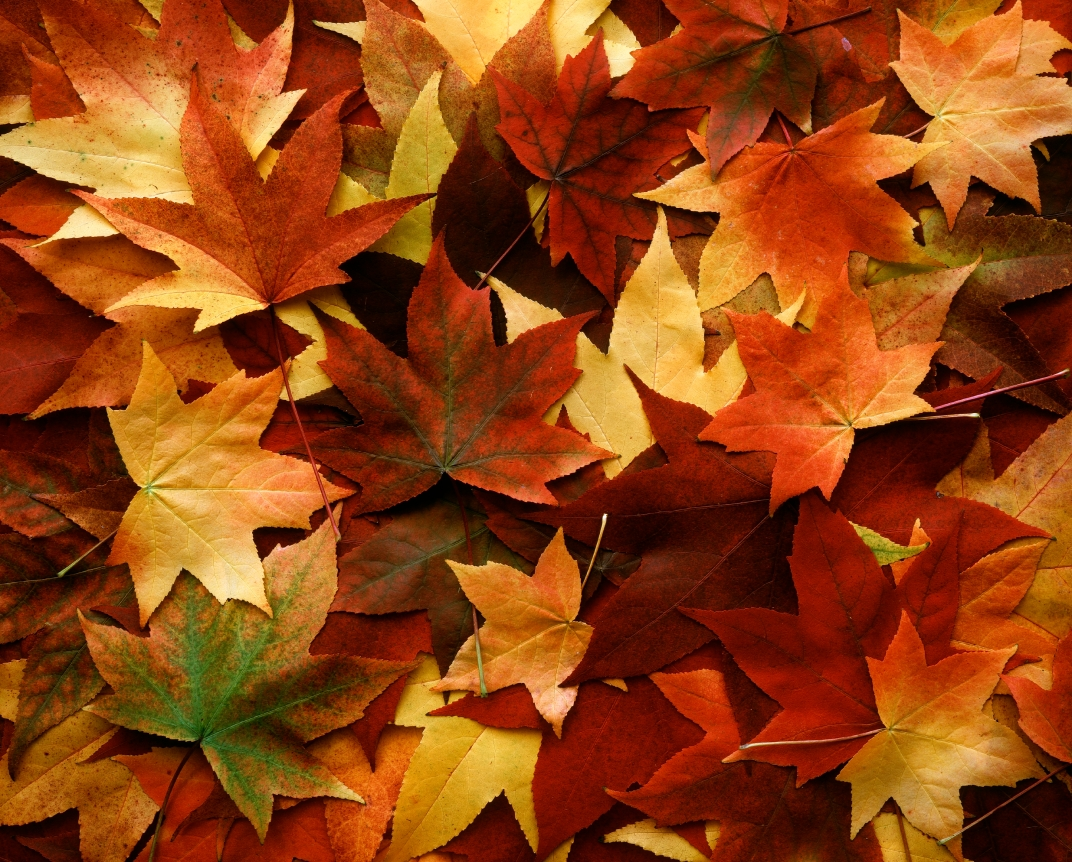 fall_leaves_on_ground